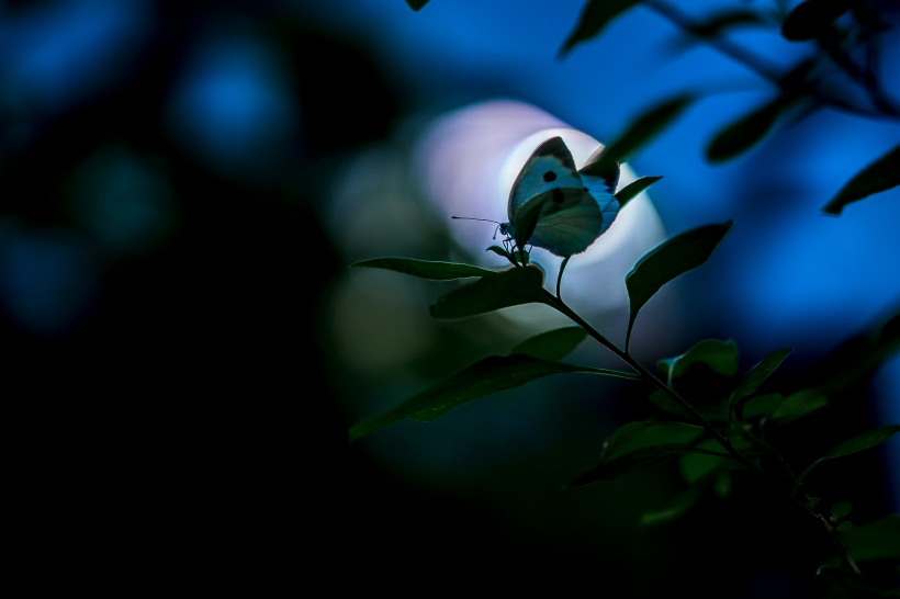In the darkness of the undergrowth
