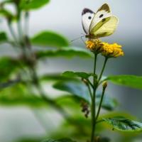 Butterflies !