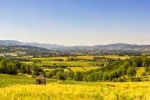 Châtillon d'Azergues : view on the vineyards
