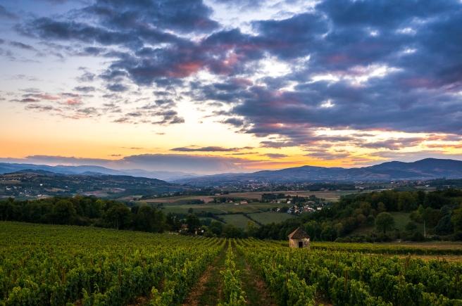 Sunset on the vineyard, Châtillon d'Azergues
