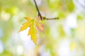 Meudon, France - Autumnal Grace