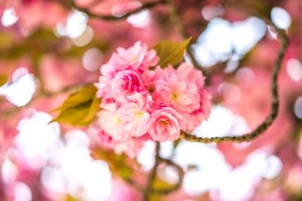 Notre-Dame : pink bouquet