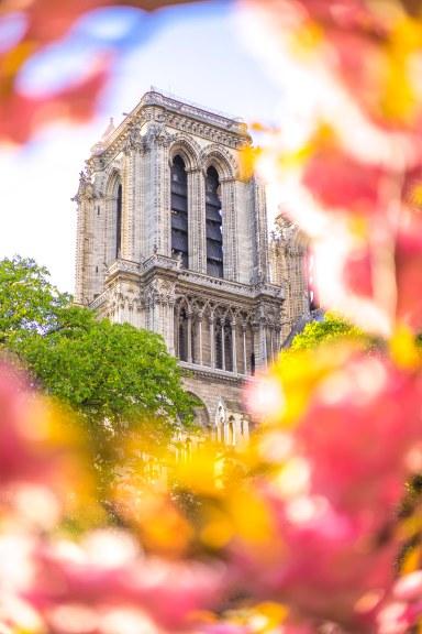 Notre-Dame : pink frame
