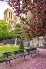 Notre-Dame: Spring is on the benches